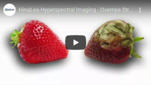 Overripe Strawberry video thumbnail