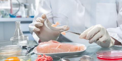 Scientist testing meat
