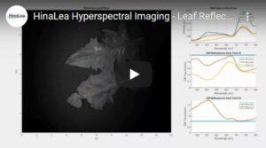 Leaf Reflectance video thumbnail